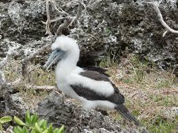 christmas island national park wikipedia