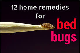 how can you get rid of bed bugs bed bug home remedies q a