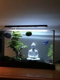 best 25 aquarium ideas on aquarium ideas aquascaping