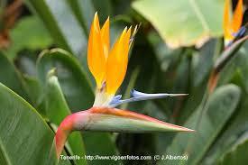 photos of botanical garden flowers canary islands botanical