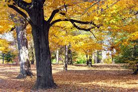 top 10 most popular louisville parks