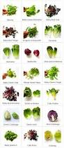 Different Names Of Green by Types Of Salad Greens Shivesh U0027s Kitchen