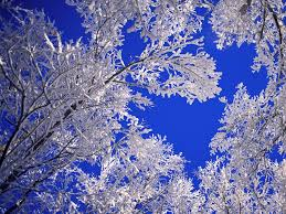 winter frosted trees winter free wallpaper in free