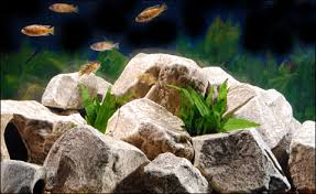 cichlid stones ornamental aquarium caves