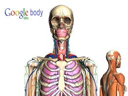 Google Body Anatomy Making Your Body A Healthy Place To Live Within Google U0027s Baseline