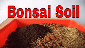Tree Care Tips To Make by How To Make Bonsai Soil For Beginners Bonsai Soil Tips Bonsai