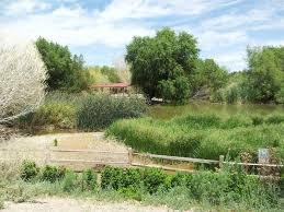 plant communities environmental nature center chaos in my ark wetlands nature center and park free family and
