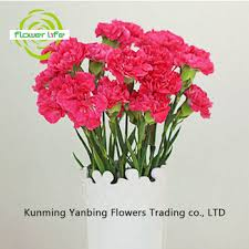 Wholesale Carnations Factory Direct Sell Wholesale Types Of Fresh Cut Flowers
