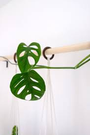 Planters That Hang On The Wall Diy Hanging Plant Wall With Macrame Planters