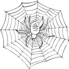 Scary Spider On A Web Coloring Page Cute Spider Pinterest Web Coloring Pages