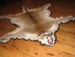 lion skin rug for sale rugs ideas