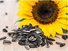 srhlbd com manha sunflower oil khan agro feed products poultry