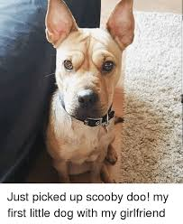 Dog Girlfriend Meme - just picked up scooby doo my first little dog with my girlfriend