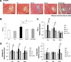 arachidonate 12 15 lipoxygenase u2013induced inflammation and oxidative