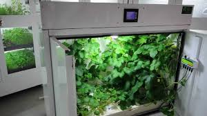 northern lights grow box the producer grow box for large yields bcnl youtube
