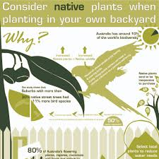 planting native species benefits of planting australian native plants infographic