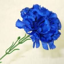 blue carnations blue carnation flowers 200 stems for 130 wedding inspiration