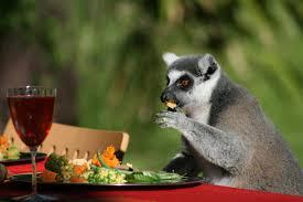 thanksgiving sf thanksgiving for lemurs uptown almanac