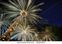 Decoration Palm Trees For Christmas by Christmas Palm Tree Stock Images Royalty Free Images U0026 Vectors