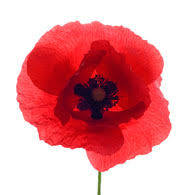 poppies flowers meaning of poppies what do poppy flowers