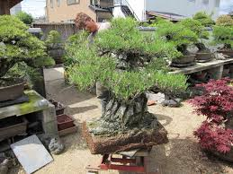 Potted Patio Trees by Flooring Interesting Garden Design With Decomposed Granite Lowes