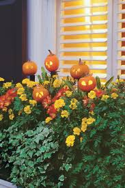 halloween take out boxes 33 halloween pumpkin carving ideas southern living