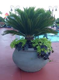 big plant urn perfect for an outside patio and pool tropical