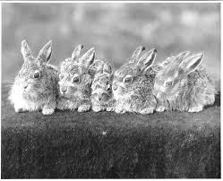 vintage rabbit 11 vintage photos of rascally rabbits modern farmer