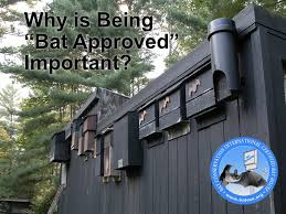 how to choose a bat house location bat conservation and recent posts