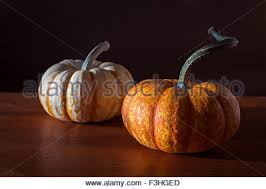Mini Decorative Pumpkins Decorative Gourds And Mini Pumpkins Stock Photo Royalty Free