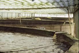 tilapia farming tanks the most efficient aquaponics technology