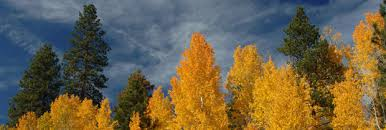 12 places fall color oregon oregonlive