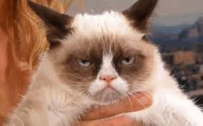 Grumpy Cat Meme Happy - grumpy cat gifs get the best gif on giphy
