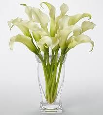 cala lillies calla atlanta florist in atlanta ga darryl wiseman flowers
