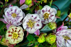 spring flower boquet flowers free nature pictures by