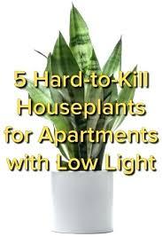 good inside plants indoor plant low light best indoor plants best indoor plants