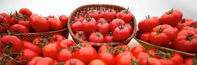 Backyard Farms Our Tomatoes Backyard Farms