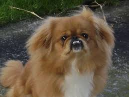 Types Of Dogs Breeds Of Small Dogs Laura Williams
