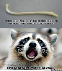 Racoon Meme - not so lucky for raccoons by douglasdegraw meme center