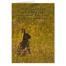 pet sympathy card loss of pet rabbit zazzle