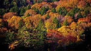 photo collection autumn trees wallpaper 1920x1080