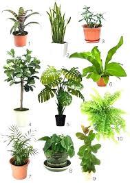 house plants low light indoor plant low light best indoor plants best indoor plants indoor