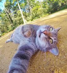 manny u0027the selfie cat u0027 captures photos of siblings