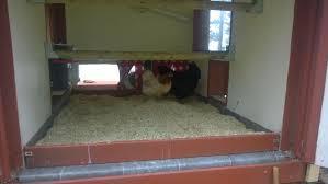 hemp bedding backyard chickens