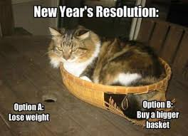 New Cat Meme - cats new years resolution funny memes funny memes