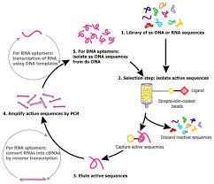 sensors free full text recent progress in nucleic acid aptamer