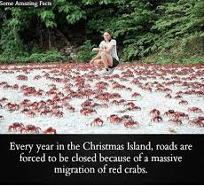 25 best memes about christmas island christmas island memes