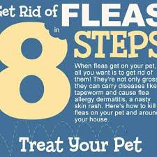 How Do You Get Rid Of Skunks In Your Backyard How Do You Stop A Flea Infestation Petcarerx