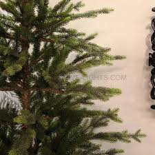 collection 2 2m pe russian pine tree