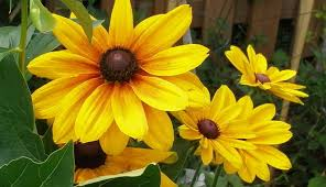 the sample seed shop buy annual flower seeds l p
